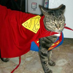 supergato avatar